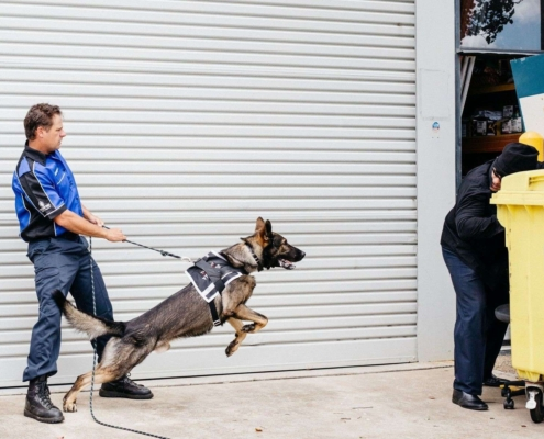 K9-Security-with-Perp
